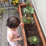 We planted a vegetable garden