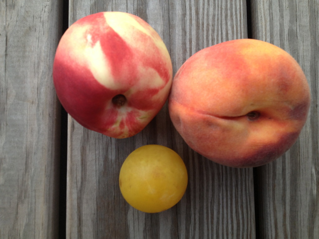 stone fruit for a puree