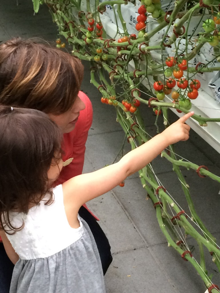 Gotham Greens Nicole teaching Eliana about their tomatoes from teeny tiny foodie