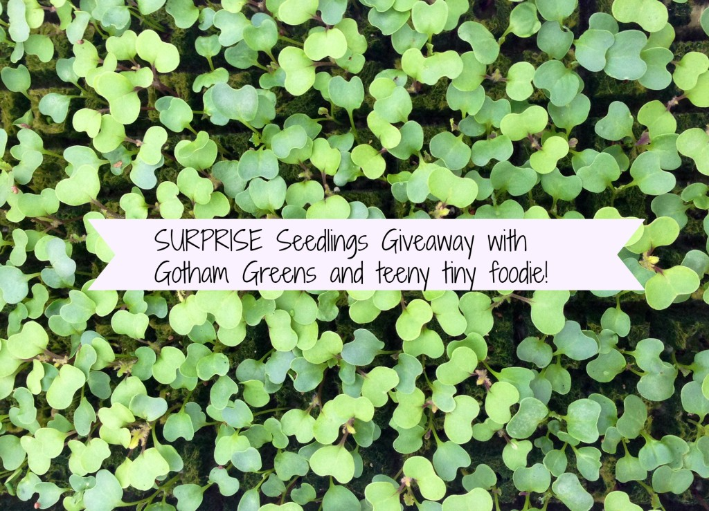 Seedlings Giveaway with Gotham Greens from teeny tiny foodie