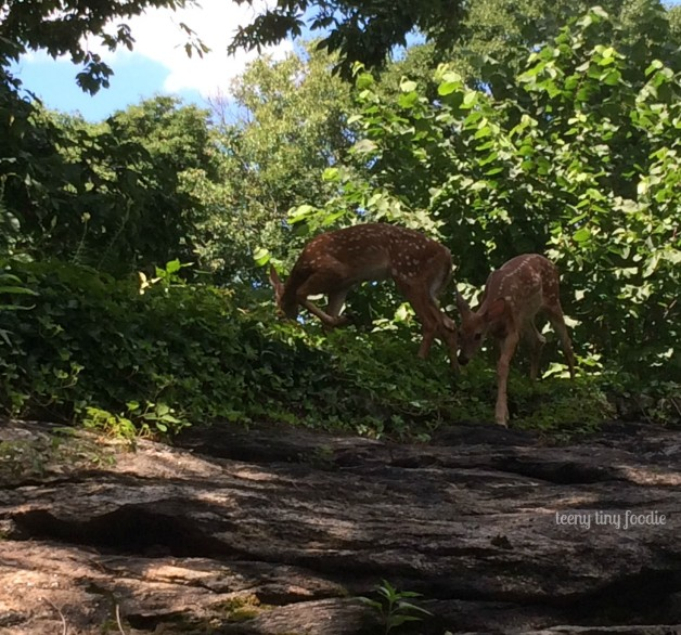 Flora and Fauna are fawn siblings that visit our backyard. I didn't realize I was moving to the forest. from #teenytinyfoodie #deerinmybackyard